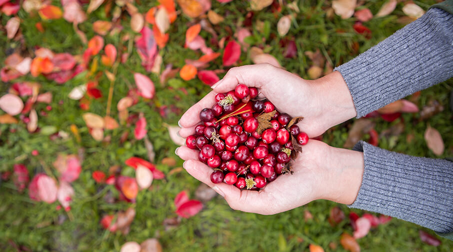 What's in season - Holding Cranberries